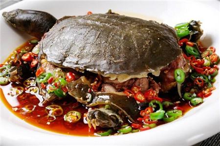 女人吃甲鱼的四大好处,甲鱼的食用禁忌