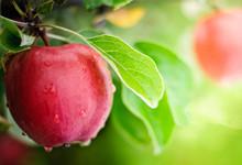 吃煮熟的苹果有哪些好处 煮熟的苹果竟然有这么多好处